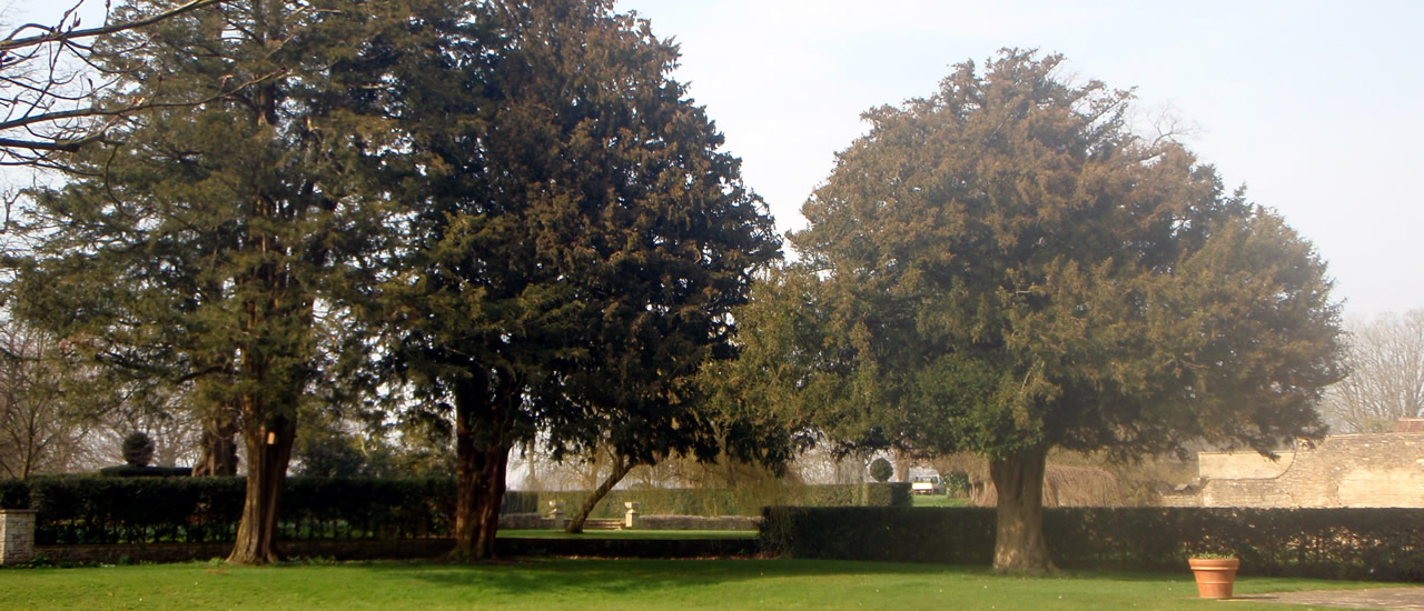 Domestic and Commercial Tree surveys